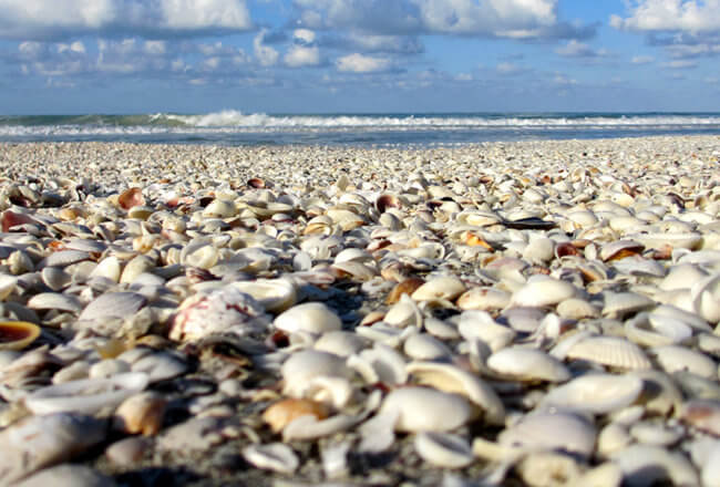 Fort Myers Beach Guide